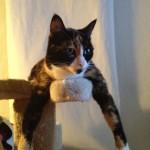 Vancouver cat sitter